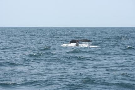 Day 3: il giorno delle balene, con operazione di polizia in mare a sorpresa!